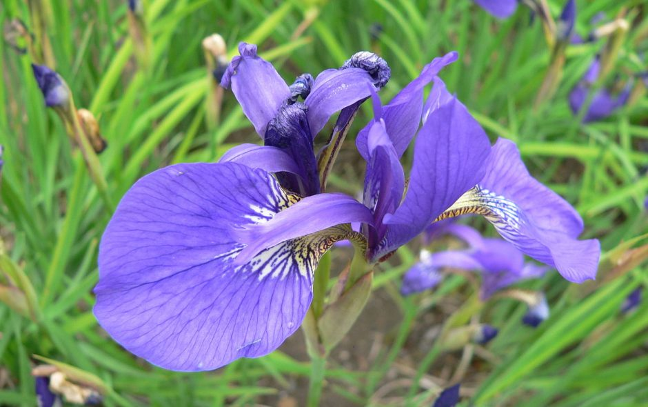 I fiori giusti per gli amanti indecisi