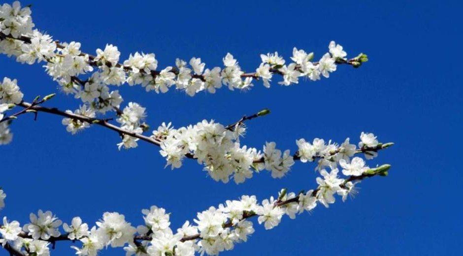 La Primavera non bussa lei entra sicura