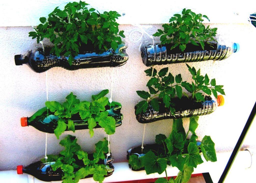coltivare un piccolo orto