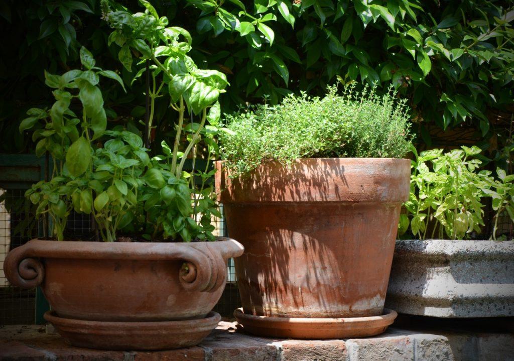 giardino degli odori