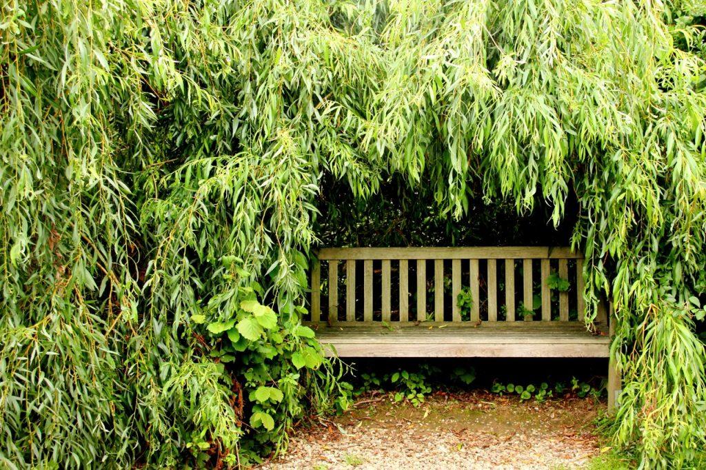giardino, oasi personale