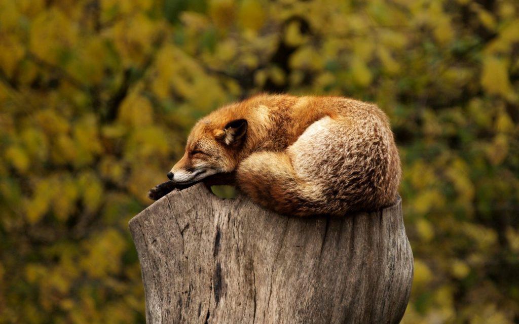 dormire come un orso