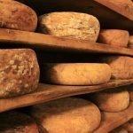 Il formaggio: prezioso alleato allo sviluppo dell'umanità