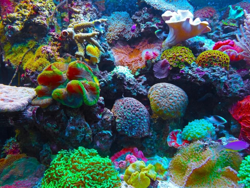 Barriera Corallina usata come discarica