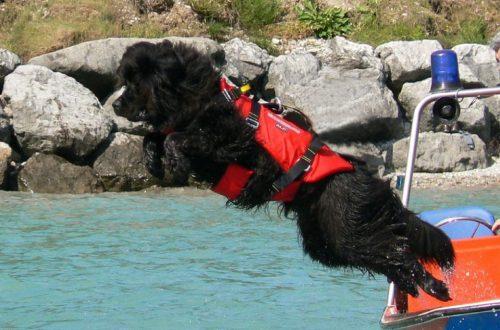cani-da-soccorso