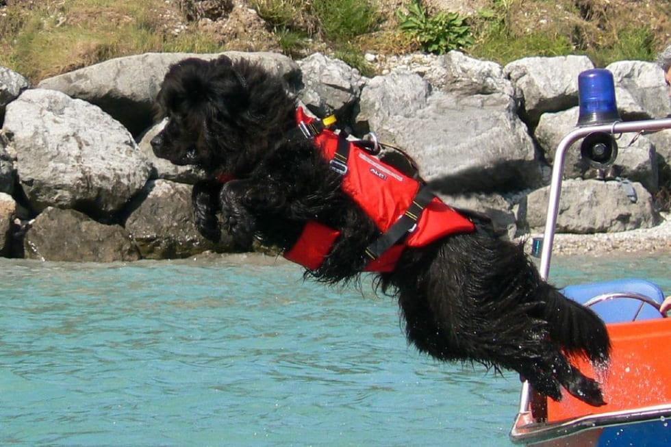 Cani da soccorso a Riva del Garda