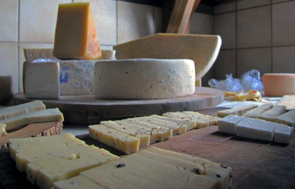 formaggio allunga la vita