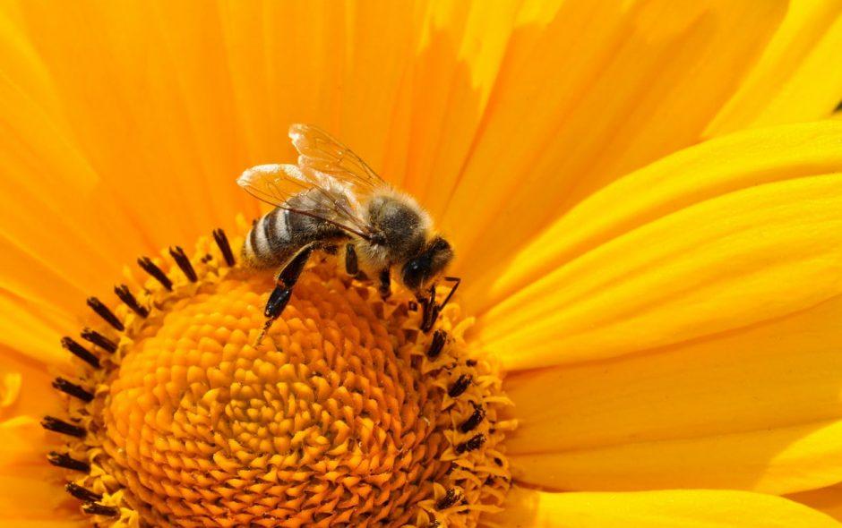 Le api in città rivelano le contaminazioni