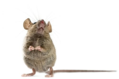 topi canterini per imparare a parlare