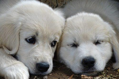 esposizione canina di riva del garda