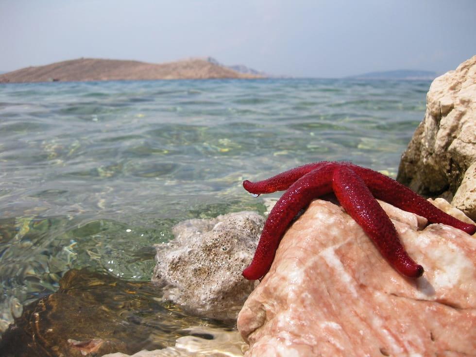 Sopravvivere in oceano aperto si può