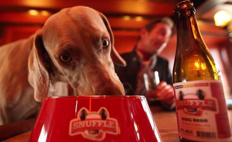 Birra per cani, per brindare coi nostri migliori amici