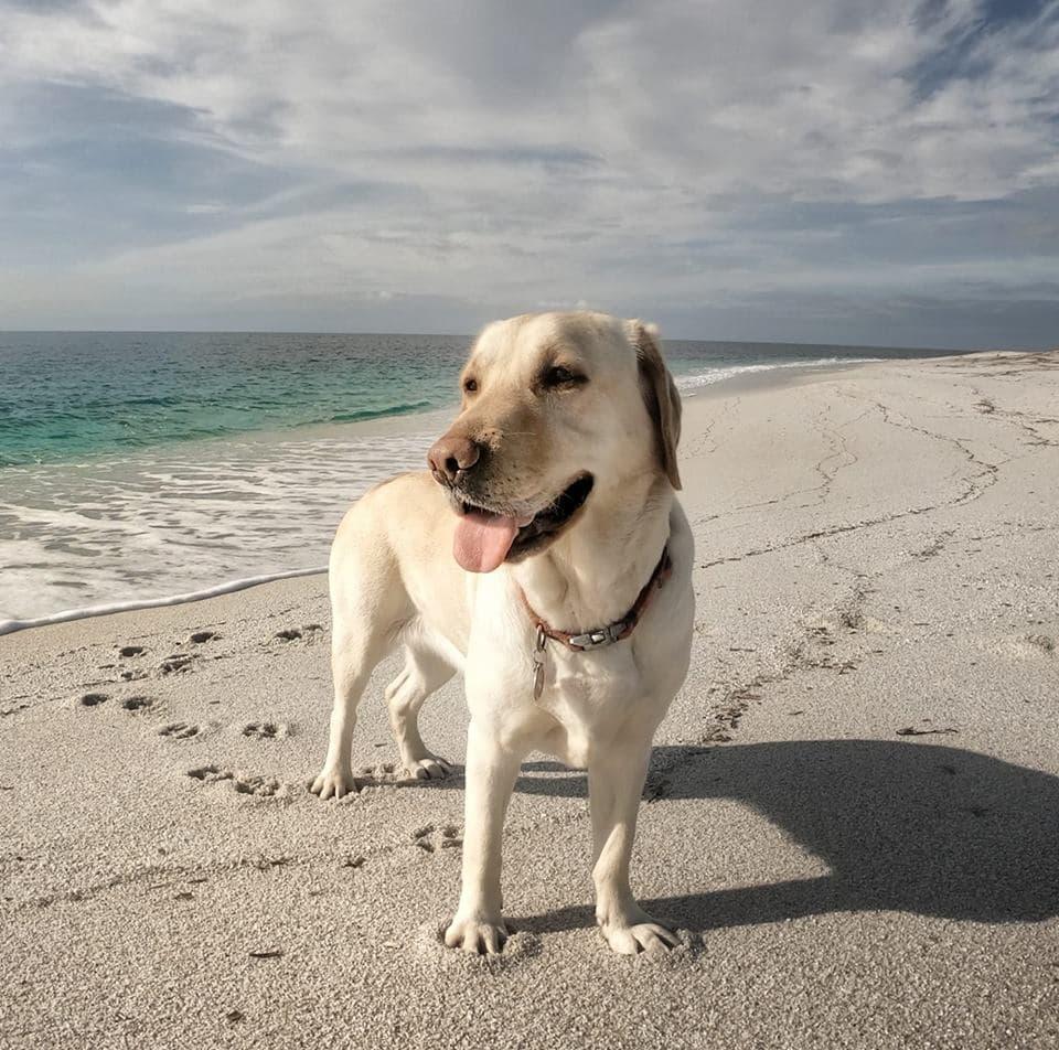 Farah la cagna ecologista che pulisce le spiagge