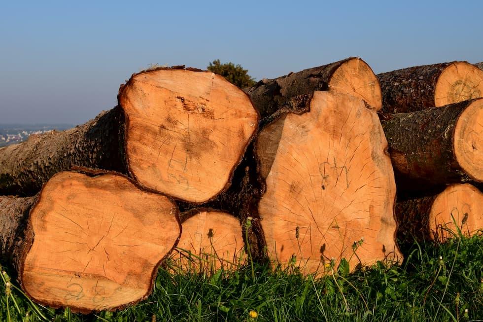 Deforestazione, quest'anno ci siamo mangiati il Belgio