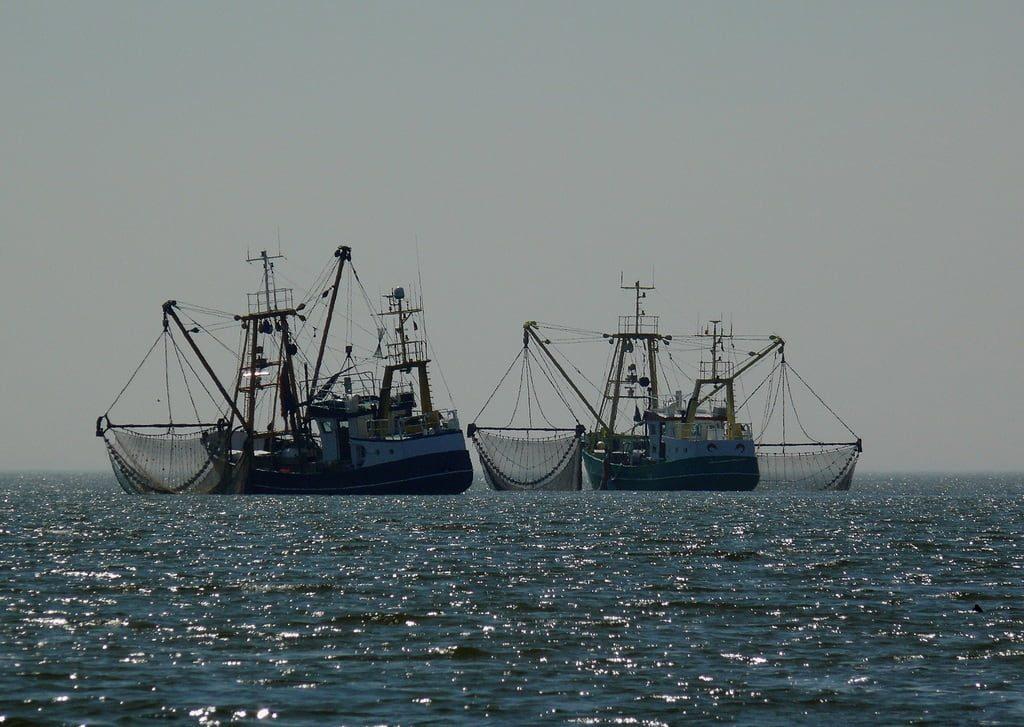 pesca elettrica lo smacco olandese