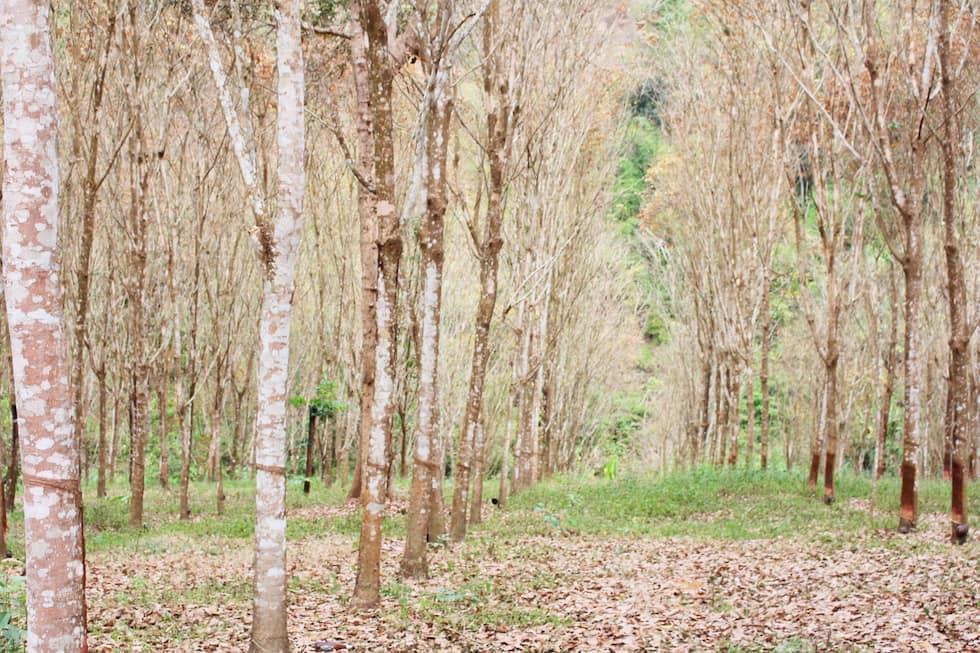 tessuto, legno, ecologia,