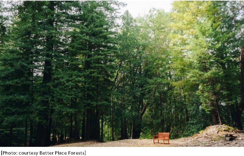 Un cimitero che in realtà è un bosco