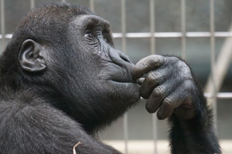 animali zoo benessere