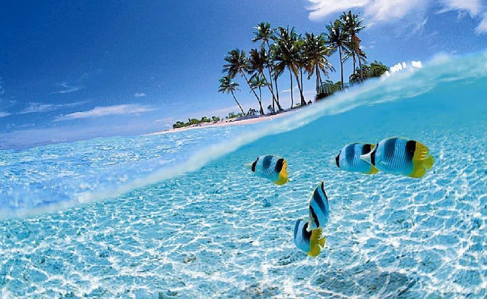 Salviamo gli Oceani smettiamo di soffocarli