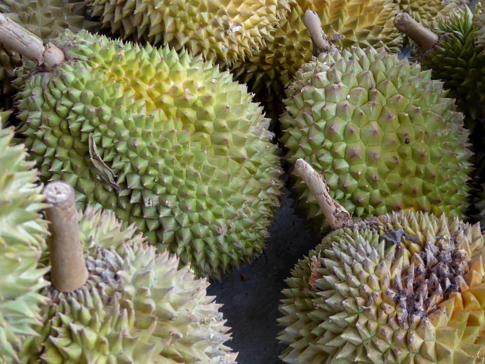 durian, puzza sapore