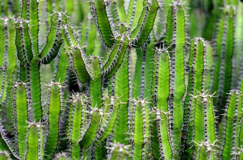 plastica cactus