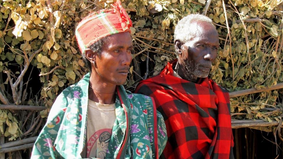 etiopia piante alberi