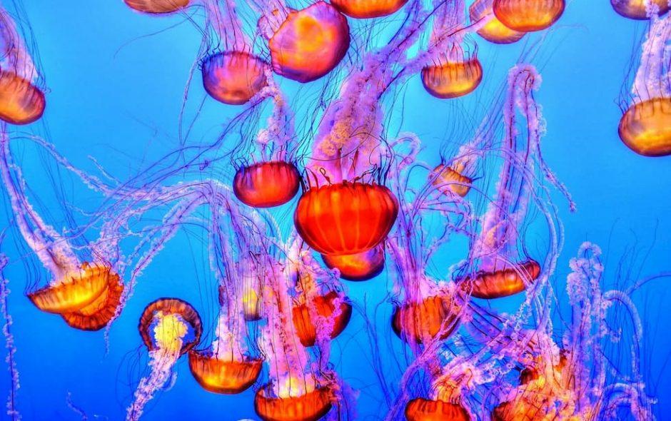 Le meduse invadono mari e oceani