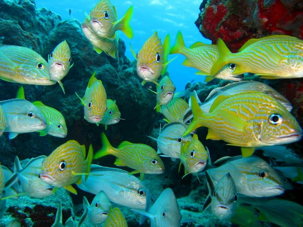 oceani pesce