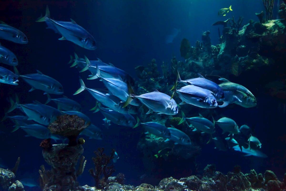Svuotiamo gli oceani troppo in fretta