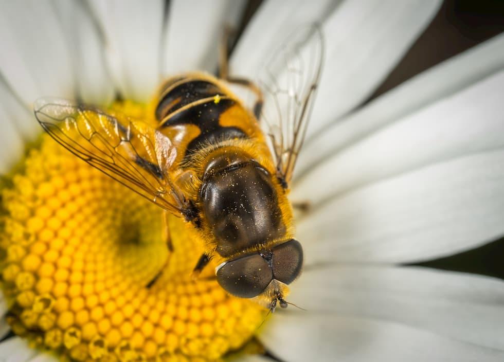 api micro-plastiche