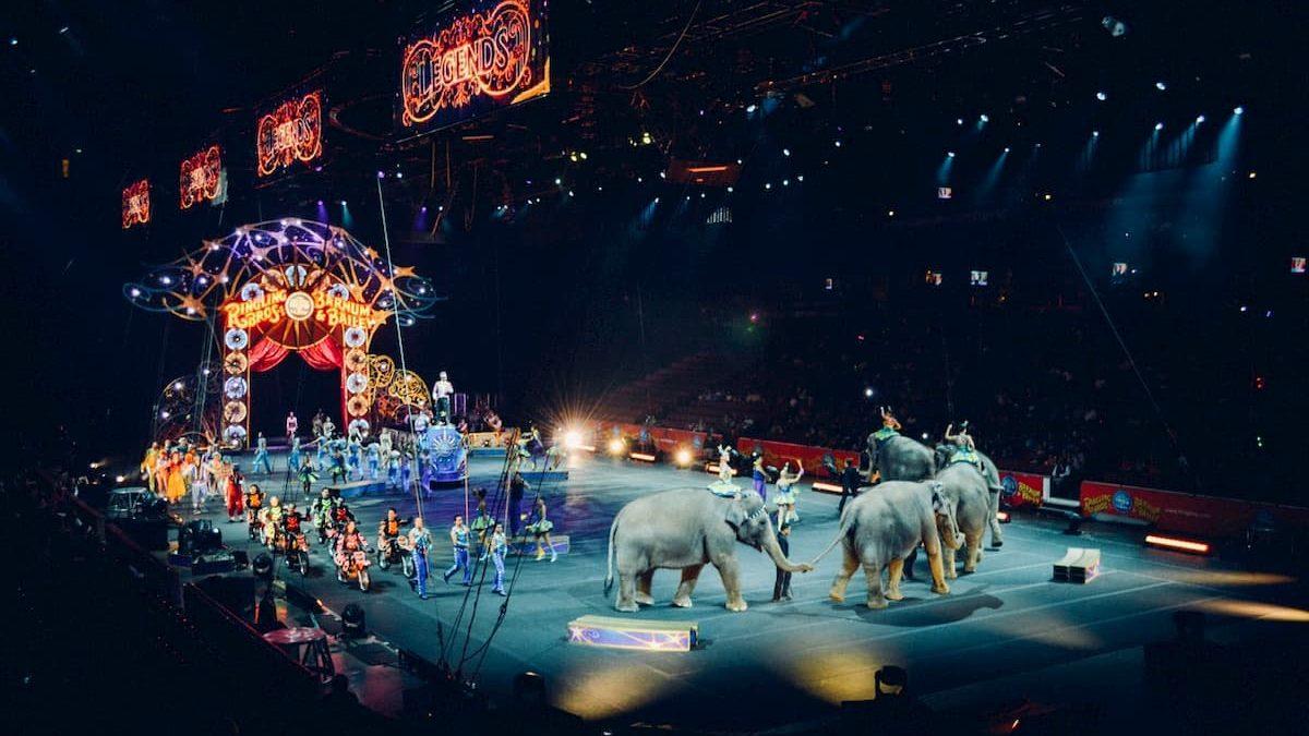 Fermiamo la crudeltà contro gli animali del circo