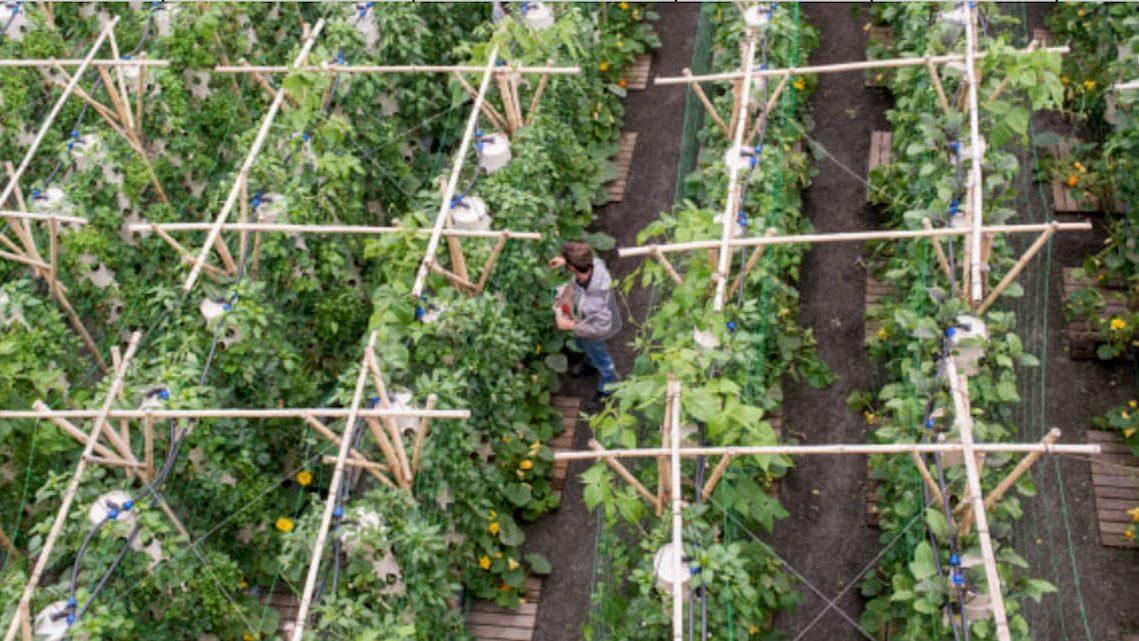 Il più grande orto sui tetti apre a Parigi