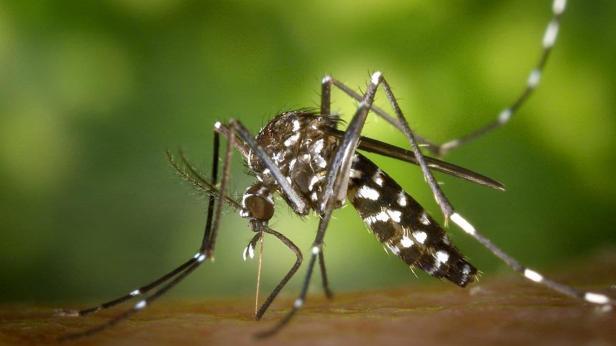 Le zanzare hanno cambiato la storia umana