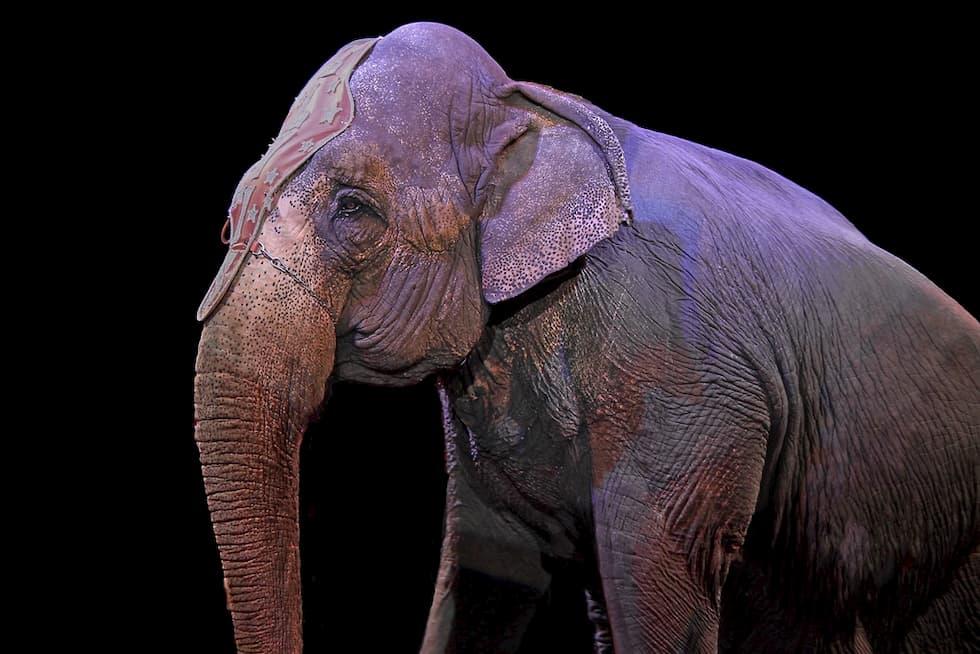 circo crudeltà animali