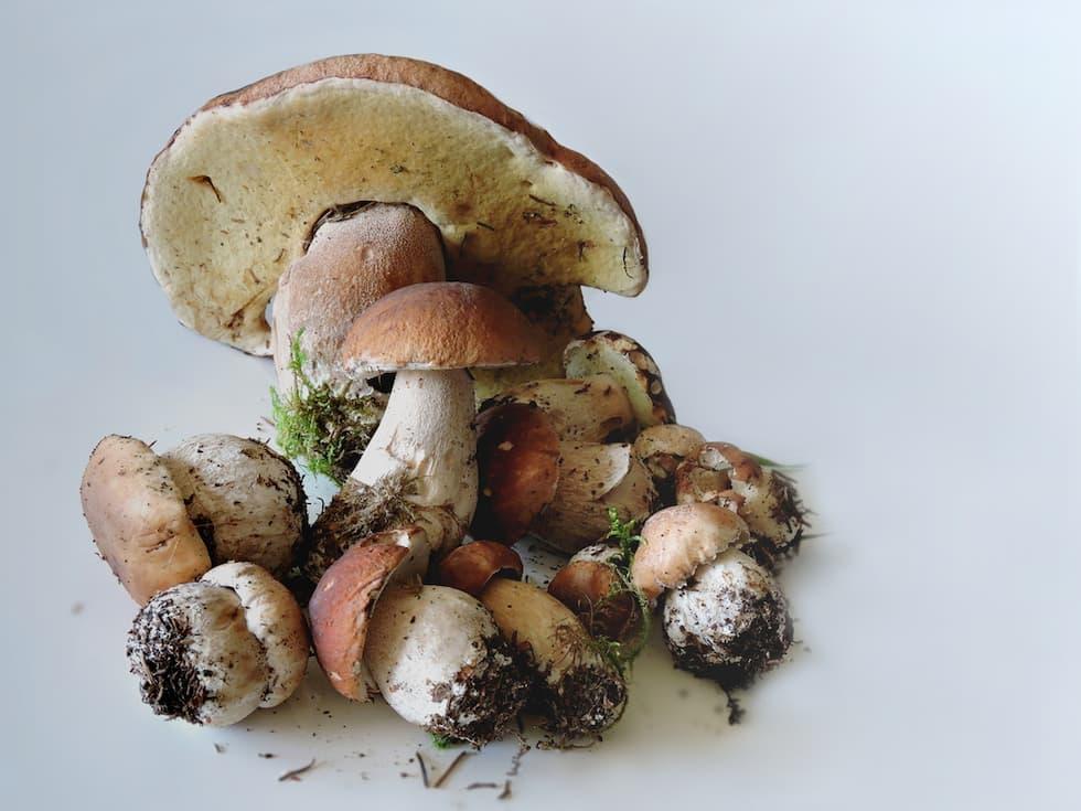 pulire funghi in modo corretto