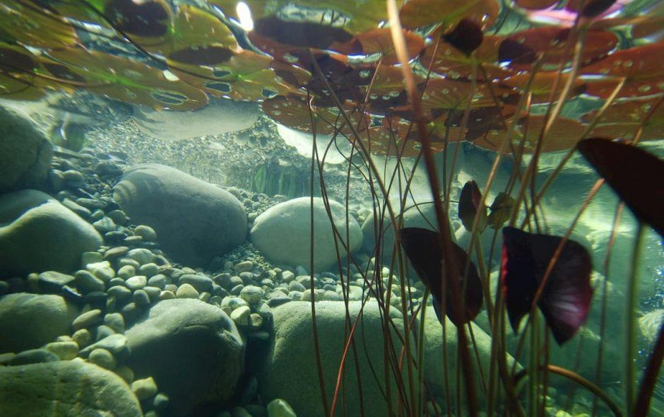 alghe che divorano anidride carbonica