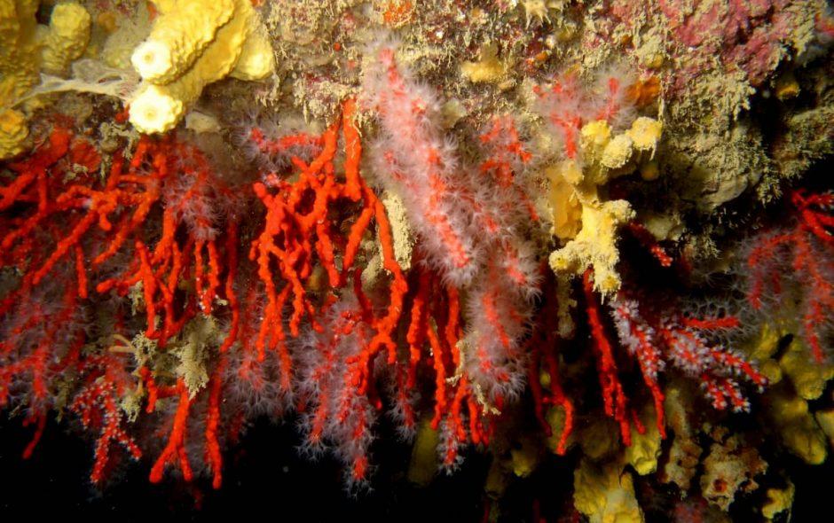 alcuni coralli sono sopravvissuti e ricrescono