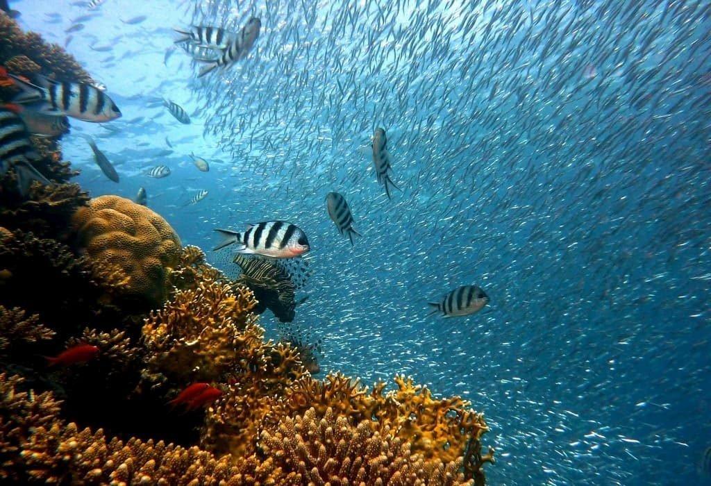 dare la scossa ai coralli