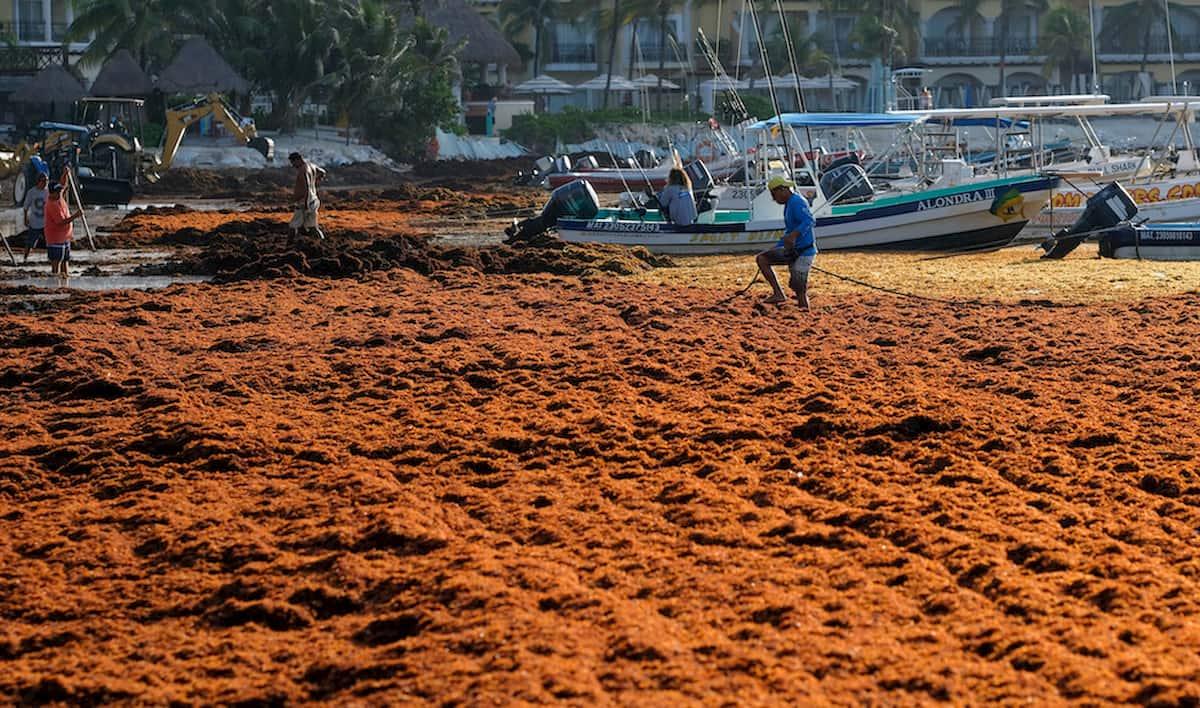 Sargassi le alghe che rovinano il turismo