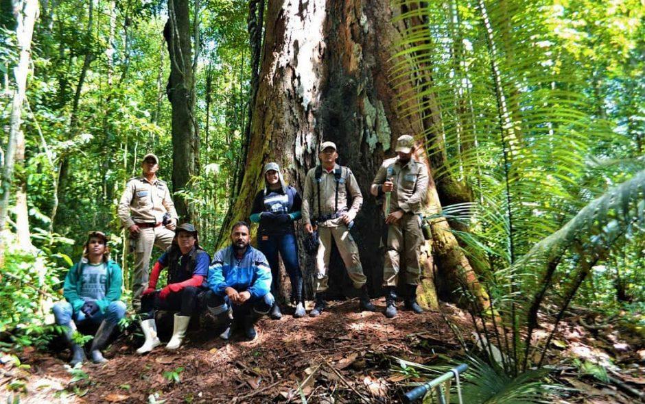 scoperto l'albero più alto dell'amazzonia