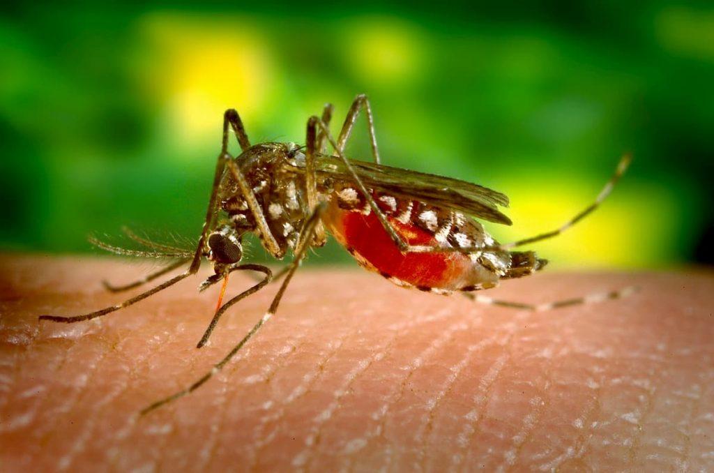 grafene respinge le zanzare