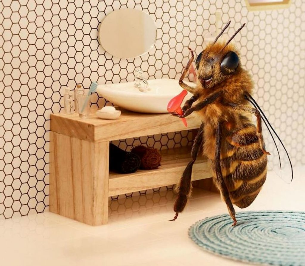l'ape B è la nostra influencer preferita