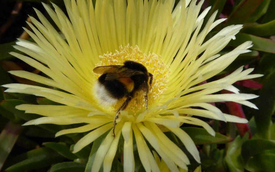 Sarà una primavera splendida in Minnesota per le api