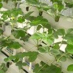 Agricoltura verticale, sempre più presente