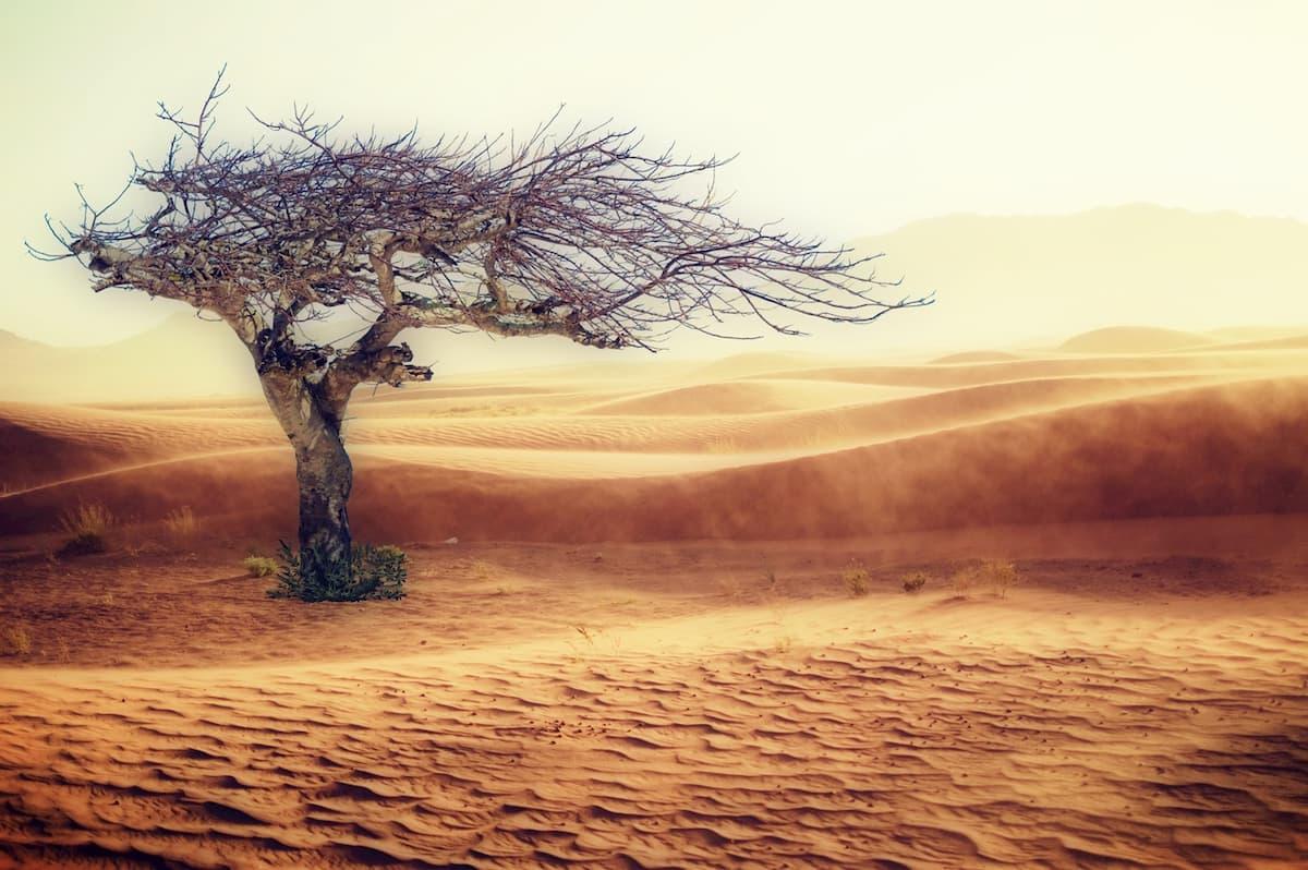 Il cambiamento climatico scatenerà nuove guerre?