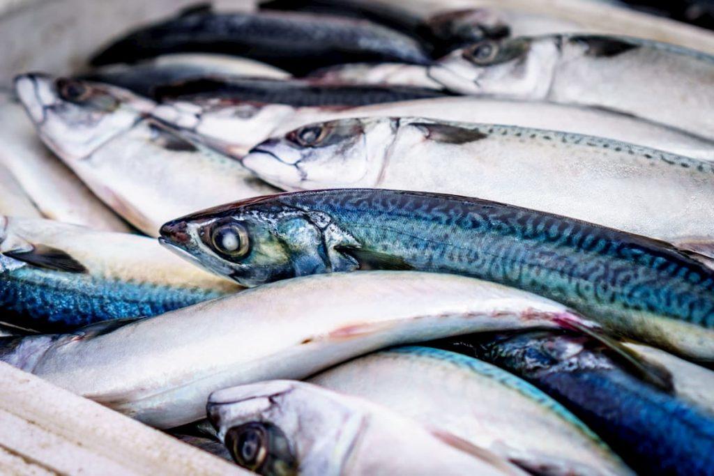il guizzo inatteso delle sardine