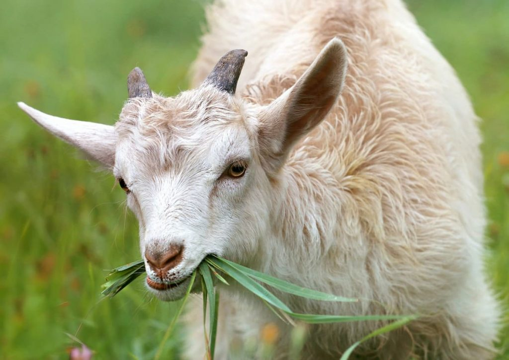 dopo capre e mucche è tempo di adottare un contadino