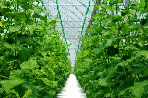 il progetto delle coltivazioni senza terra
