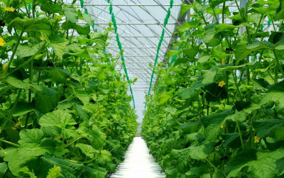 Il progetto delle coltivazioni senza terra di ENEA