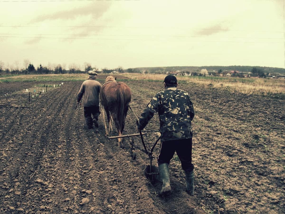 Un prezzo equo per gli agricoltori biologici